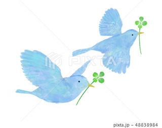 青い鳥2.jpg