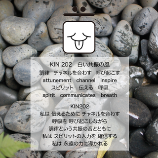 kin202.png